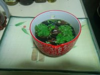 酸辣猪红紫菜汤的做法